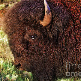 Janice Rae Pariza - Head of a Bison in Yellowstone