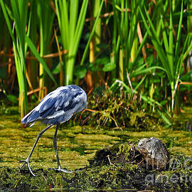 Al Powell Photography USA - Headless Heron