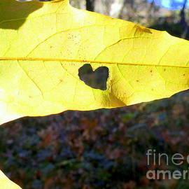 Marlene Rose Besso - Heart Leaf