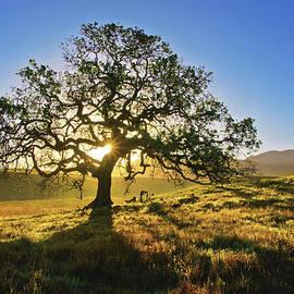 Holly Higbee-Jansen - Heart Oak