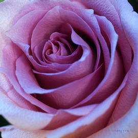 Kathy Yates - Heart of a Rose