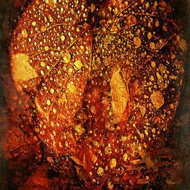 Douglas MooreZart - Heart of the Forest