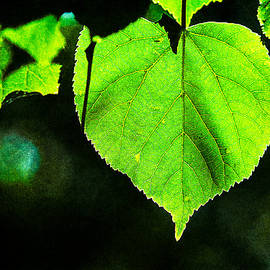 Alexander Senin - Heart Of The Forest - Green