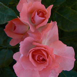 Helen Xiao - Heart Rose
