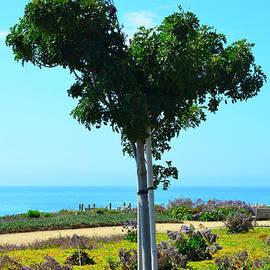 Debra Thompson - Heart Shaped Tree at Pismo Beach