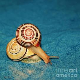 Aimelle - Heart Snails