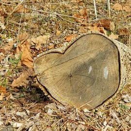 Kathy Barney - Heart Stump