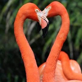 Sabrina L Ryan - Heart to Heart Flamingo