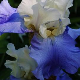 Bruce Bley - Heavenly Blue