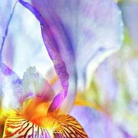 Theresa Tahara - Heavenly Iris