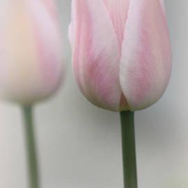 The Art Of Marilyn Ridoutt-Greene - Heavenly Love