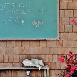 Kim Bemis - Heirloom Tomatoes Are Ripe - The Cat