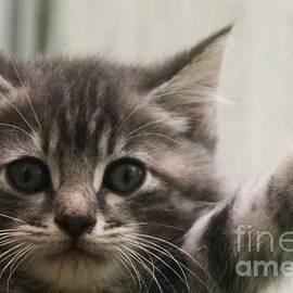 PainterArtist FIN - HELLO AGAIN Kitten