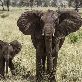 Chris Scroggins - Hello Elephants