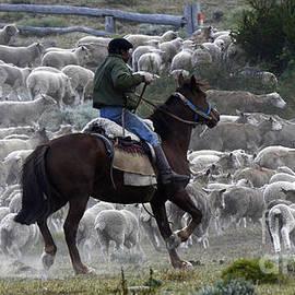 Bob Christopher - Herding Sheep Patagonia 1