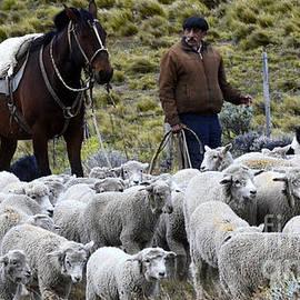 Bob Christopher - Herding Sheep Patagonia 3