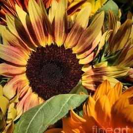 Robert McCubbin - Here Comes The Sun