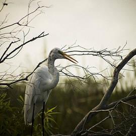 Bradley R Youngberg - Heron At Dusk