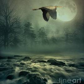 Andrea Kollo - Heron By Moonlight