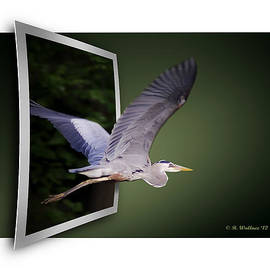 Brian Wallace - Heron In Flight - OOF