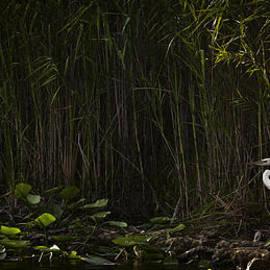 Bradley R Youngberg - Heron In Grass