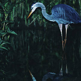 Joe  Connors - Heron in the Moonlight