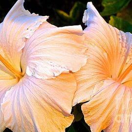 Cheryl Cutler - Hibiscus At Sunset