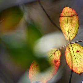 Guido Montanes Castillo - Hidden forest leaves