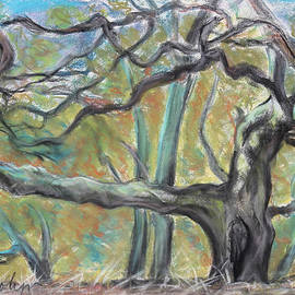 Asha Carolyn Young - Hidden Oak and Canyon in Briones Park