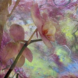 Donna Walsh - Hidden Orchid