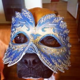Robert Stewart - Hiding True Colors #dog #boxer #pet