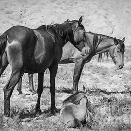 Janice Rae Pariza - High Desert Wildlife