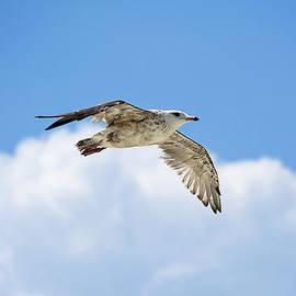 Kenneth Albin - High Flight in Clouds