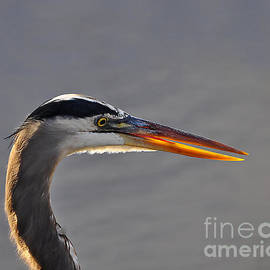 Al Powell Photography USA - Highlighted Heron