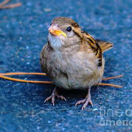 Brian Tada - His Eye Is On the Sparrow