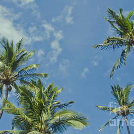 Sharon Mau - Hoaloha Beach Niu Hawaiian Coconut Palms Maui Hawaii