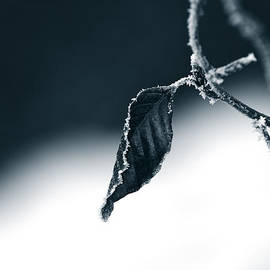 Dan Radi - Hoarfrost On A Leaf
