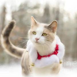 Alana Ranney - Holiday Cat