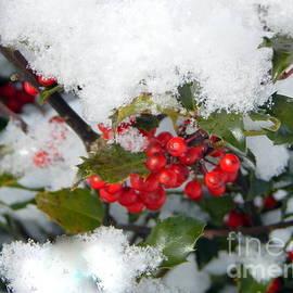 Karen Cook - Holly berries in the snow