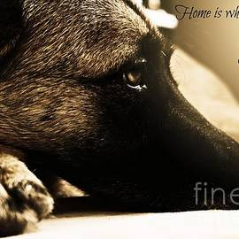 Clare Bevan - Home is Where The Dog Is