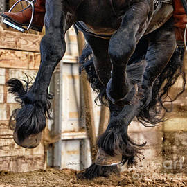 Lori Ann  Thwing - Hooves and Feathers of Friesian Stallion Tonjes 459 Sport