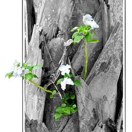 Mariarosa Rockefeller - Hope... From Decay New Growth