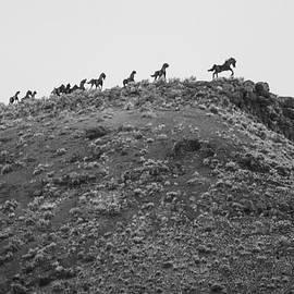 Paul Bartoszek - Horizon Horse