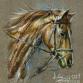 Daliana Pacuraru - Horse face drawing