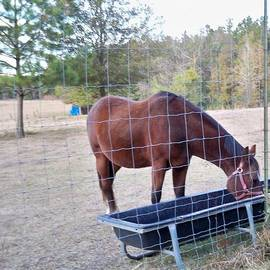 Joseph Baril - Horse Grazing