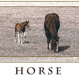 Janice Rae Pariza - Horse