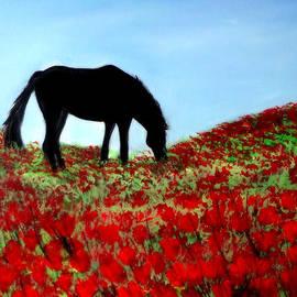 Katy Hawk - Horse on a Ridge Eating Poppies