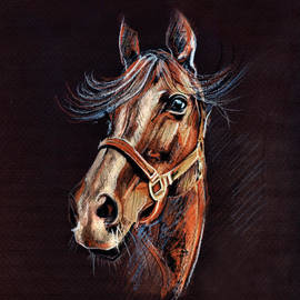 Daliana Pacuraru - Horse Portrait