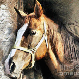 Daliana Pacuraru - Horse Portrait - drawing