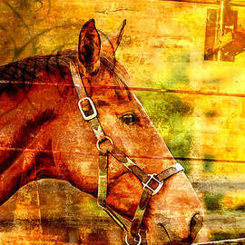Geraldine Scull   - Horse profile on textured wood